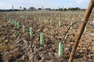 Regularização das disponibilidades hídricas da vinha